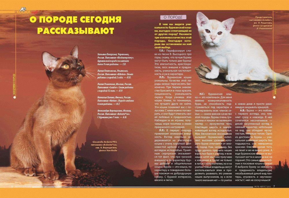 кошки-инфо